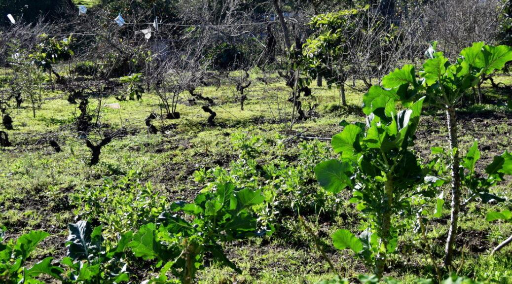 Hortas de Sao Luis